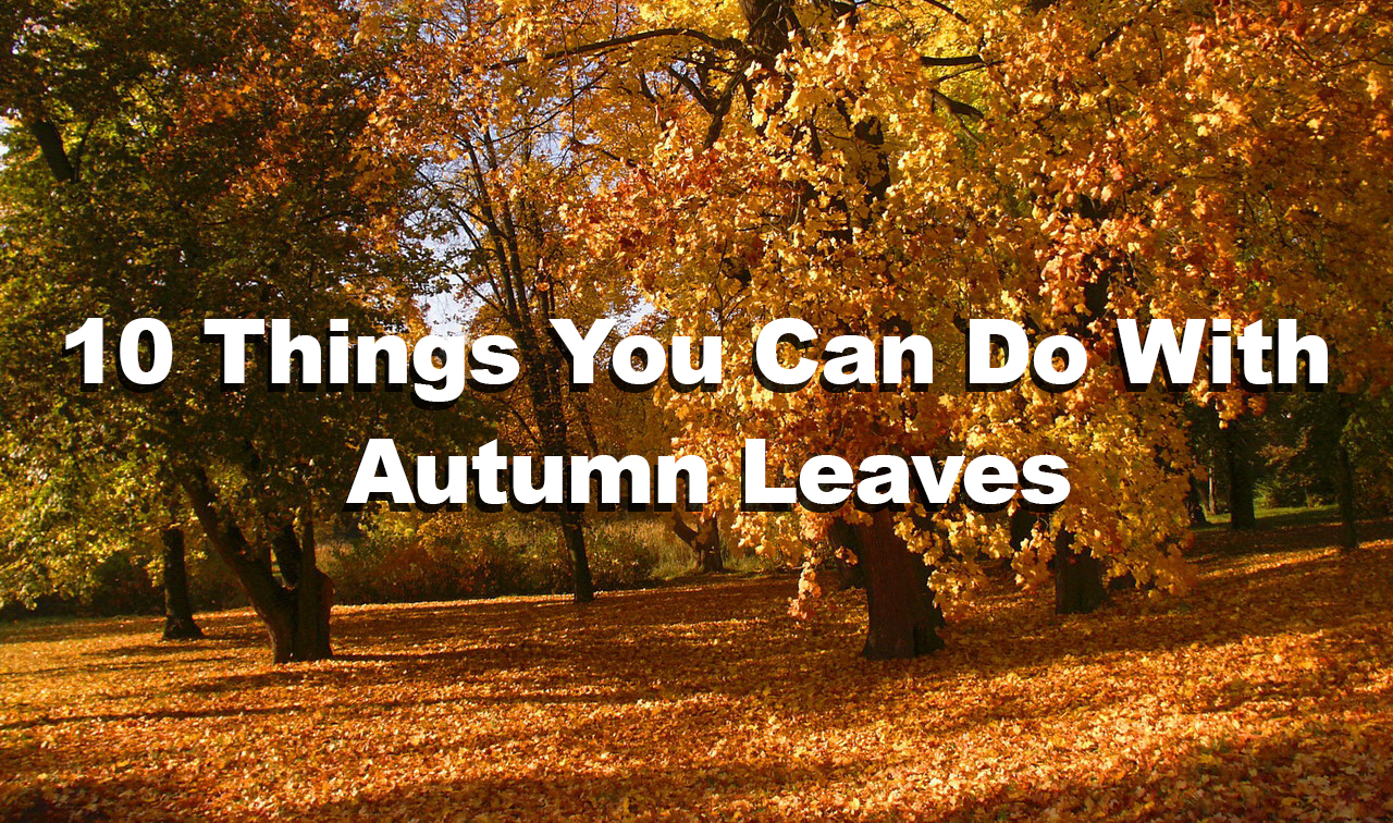 10 Things You Can Do With Autumn