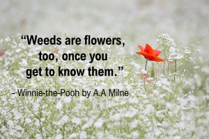 Winnie the Pooh Quotes _ Weeds are flowers, too, once you get to know them