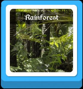 rainforest name ideas